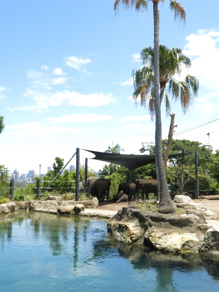 Throwback Travels: Taronga Zoo, Sydney (Australia)