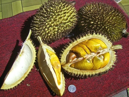 Eat like the locals do - durians anyone?