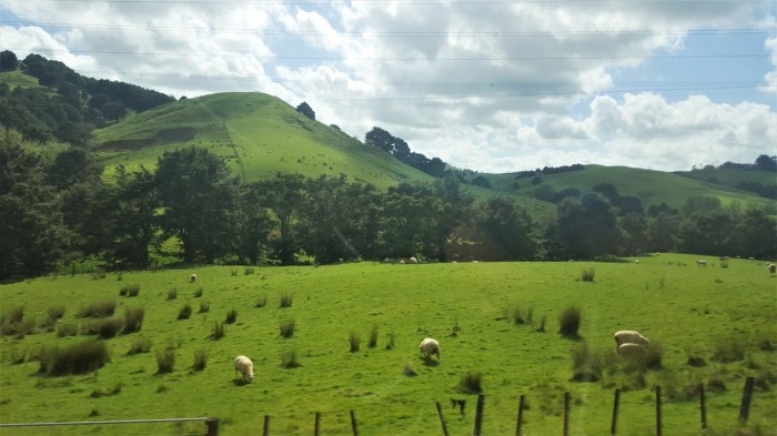 Bus Ride to Auckland